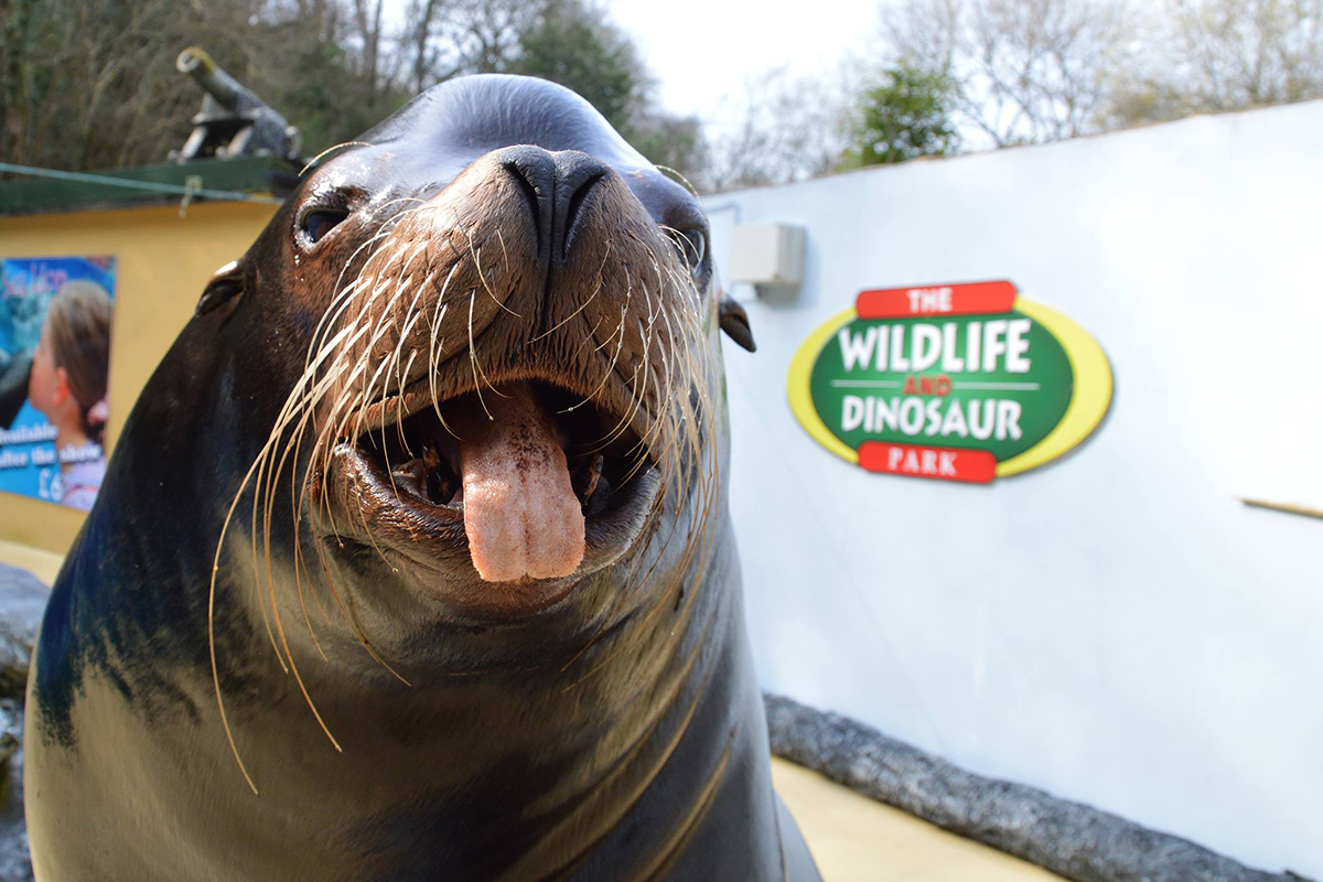 combe martini wildlife and dinosaur park family attraction in North Devon